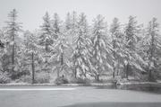 Far Side in Winter 1