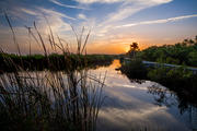 Florida Scenics