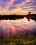 Everglades Morn