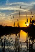 Everglades Morn ll