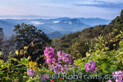 Fine Art Photography By Rob Travis