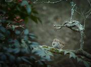 DelleElainePhotography-1-13