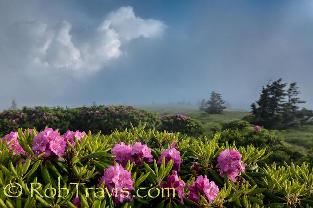 Enjoying the View - Grassy Ridge Bald on Roan Mountain