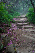 Petaled Pathway on the Parkway