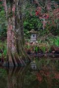 2018 Charleston - Magnolia Gardens