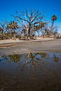 2018 Charleston - Hammock Island