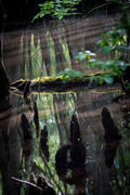 Francie Beidler Audubon Forest
