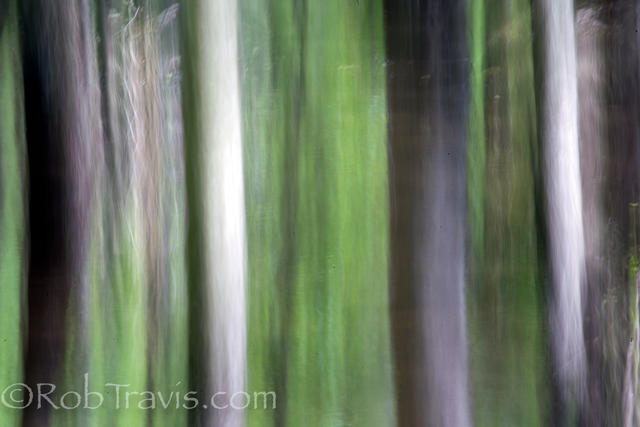 Cypress Landscape 5