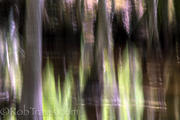 Cypress Landscape 3
