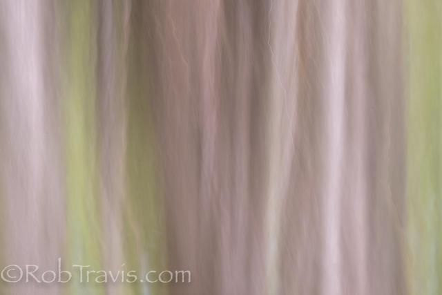 Cypress Landscape 6