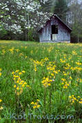 Flowers and Barn