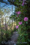 Linville Gorge - Rhodo Trail