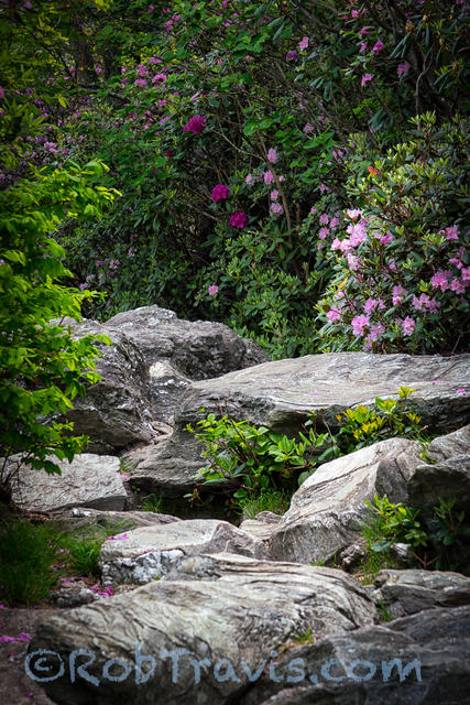Linville Gorge - Angel's Landing