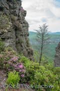 Linville Gorge - Tree as Subject
