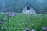 Ironweed Weed Barn (H)