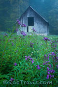 Ironweed Weed Barn (V)