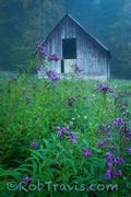 Ironweed Weed Barn (V)