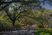 Magnolia Gardens - Shaded Walk