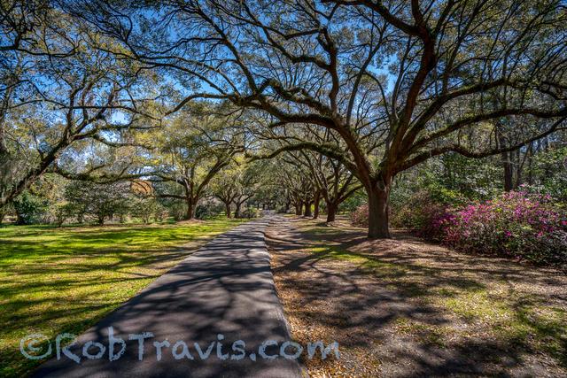 Magnolia Gardens - Meandering Way