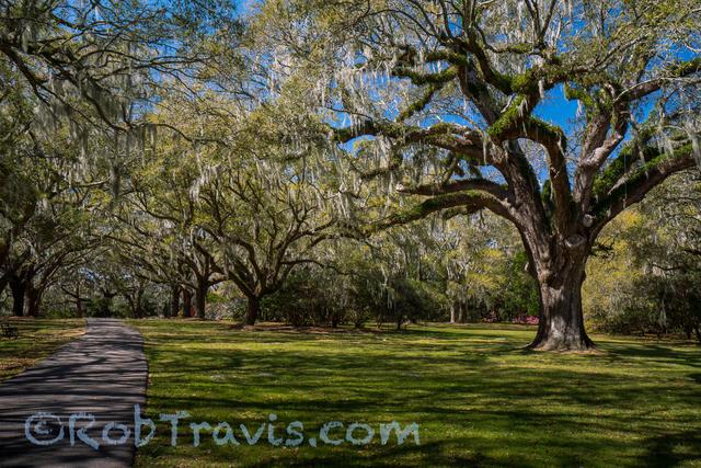 Magnolia Gardens - Spring Afternoon