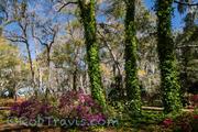 Magnolia Gardens - 3 Sentinels