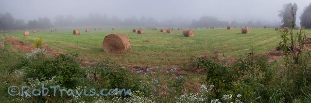 Hayfield in the Morning