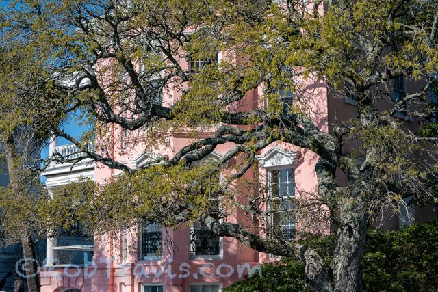 Architecture and Live Oak