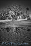 Boneyard Reflection