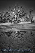 Boneyard Reflection