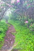 Petalled Path