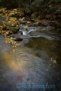 Golden Maple - Jones Gap State Park
