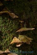 Fungus Macro - Jones Gap State Park
