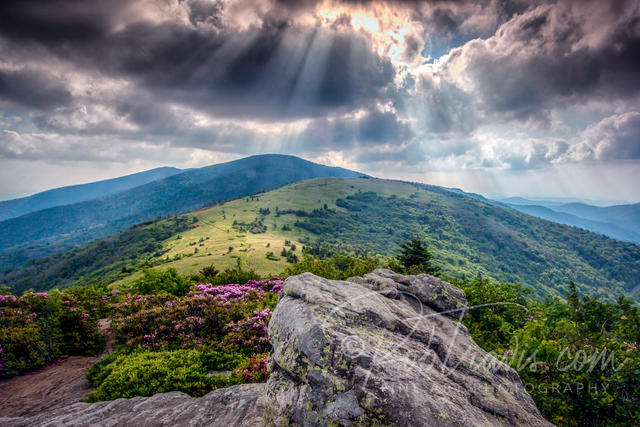 Roan Mountain Afternoon II - Life on the Appalachian Trail