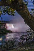 Horseshoe Falls, Twilight View through Trees _DSC0572