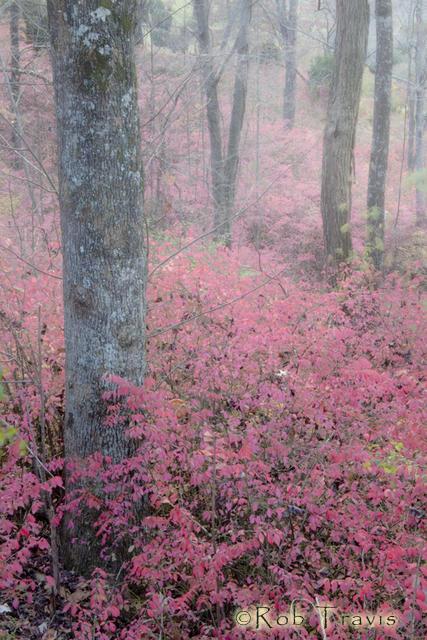 Dancing Trees in Burning Bushes