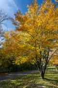 Niagara Falls Scenic - Tree _DSC0772