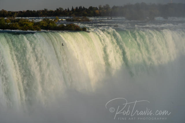 Horseshoe Falls with Bird ll _DSC0872