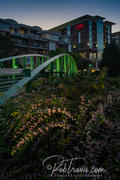 Eugenia Duke pedestrian bridge, flower foreground