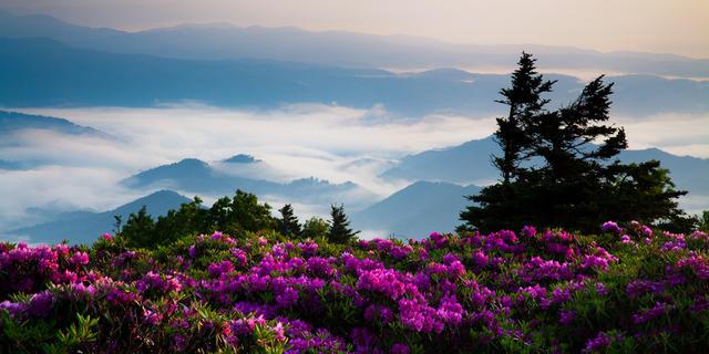 Sunrise on Grassy Ridge Bald