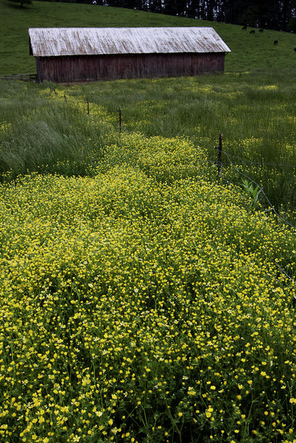 Buttercup Trail to Barn