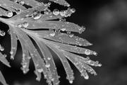 Micro Drops.