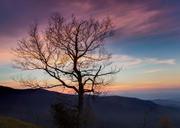 Parkway Sunrise Tree