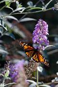 Butterflies, And...