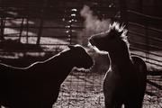 Backlit Horses ll