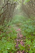 Petaled Path at Craggy Gardens