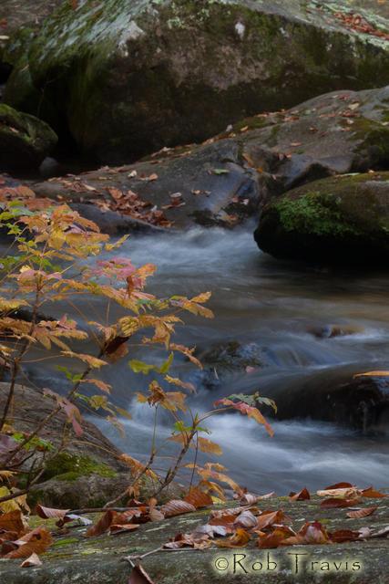 Oak sapling and cascade, Vertical