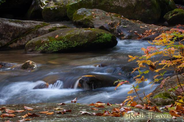 Maple sapling and cascade, Horizontal