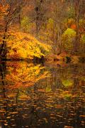 Autumn Pond Vertical