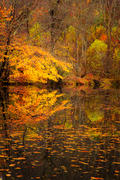 Autumn Pond Vertical