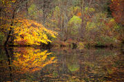 Autumn Pond Horizontal